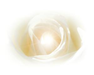 startseite_rose mit Lichtstrahl (002)
