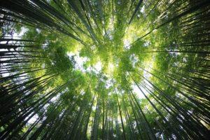 trees-918672_640